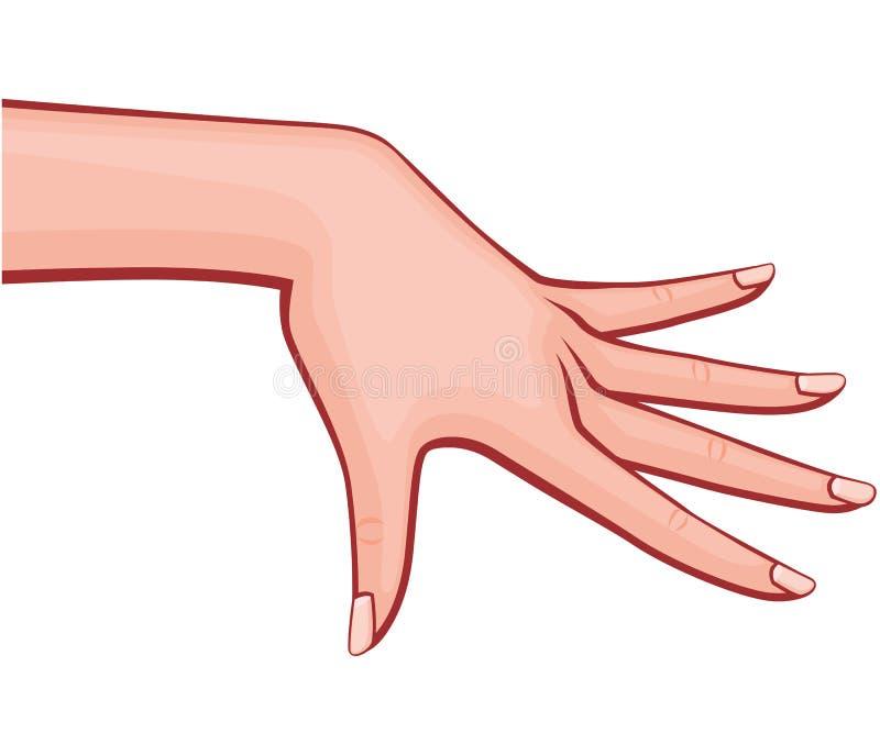 Handen för den eleganta kvinnan med fördelade ut fingrar med illustrationen för stil för fransk manikyr som den Retro skisserade  stock illustrationer