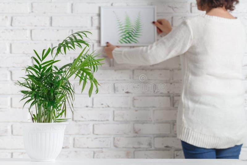 Handen för kvinna` s är den hållande fotoram- och betongkrukan med den hem- växten arkivbilder