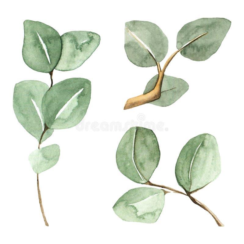Handen målade gröna eukalyptusfilialer stock illustrationer