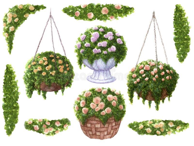 Handen målade vattenfärgen ställde in av rosor i korgar och krusidullgränser med sidor som isolerades på vit bakgrund royaltyfri illustrationer