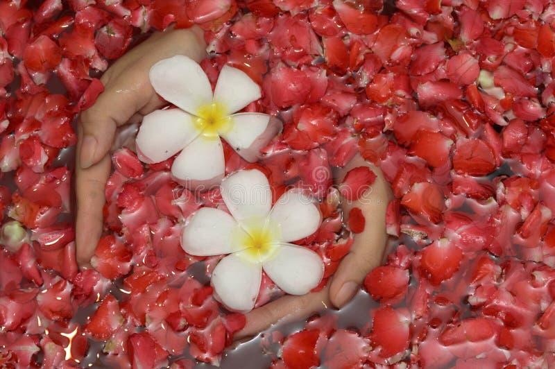 Handen met bloemen royalty-vrije stock afbeelding