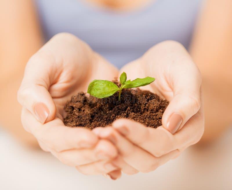 Handen met groene spruit en grond royalty-vrije stock foto's