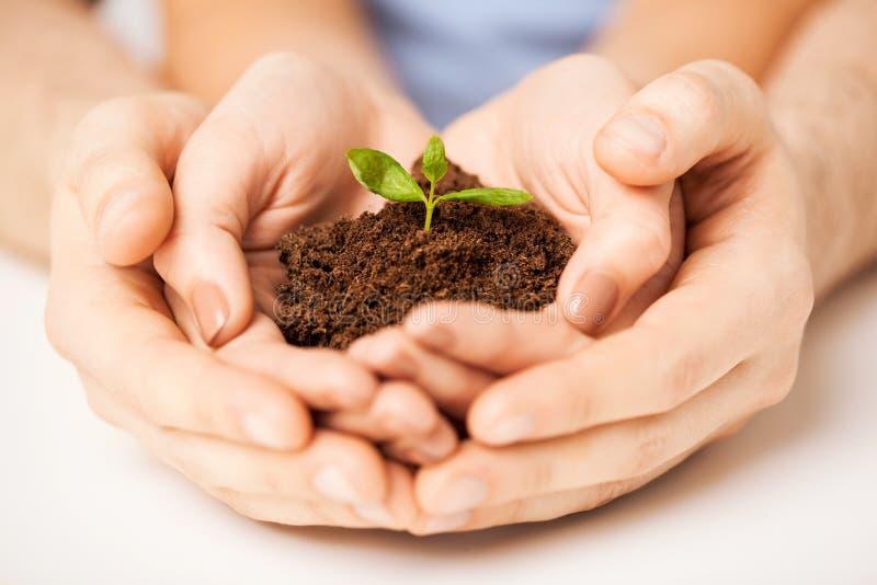 Handen met groene spruit en grond royalty-vrije stock fotografie