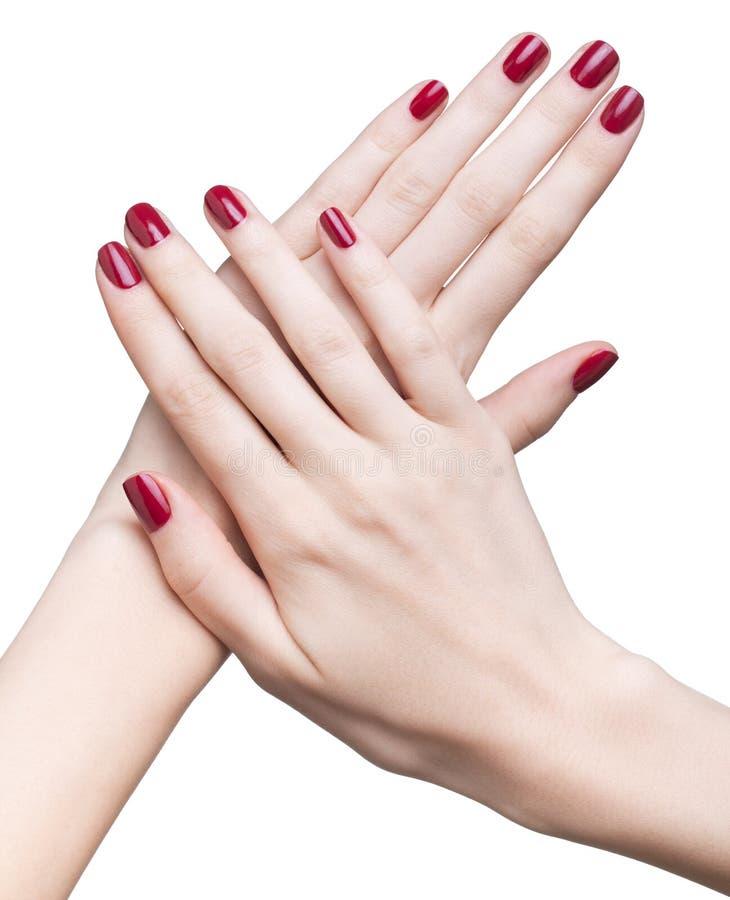 Handen met rode manicure stock afbeelding