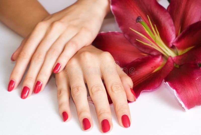 Handen met roze manicure en lelie royalty-vrije stock fotografie