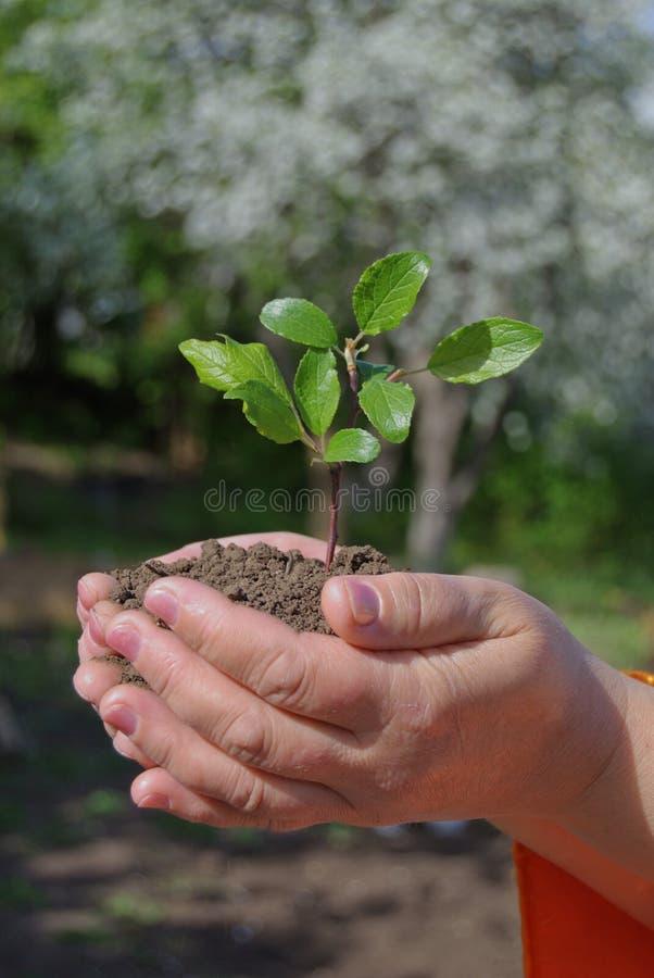 Handen +plant royalty-vrije stock foto's