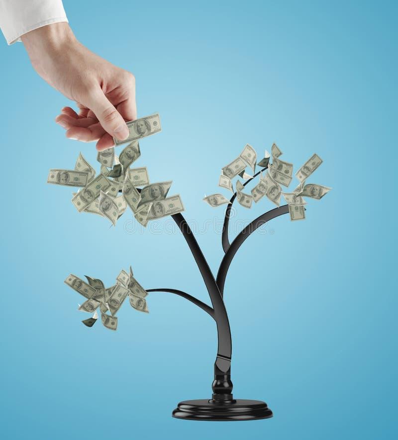 Handen skapar dollarträdet royaltyfri bild