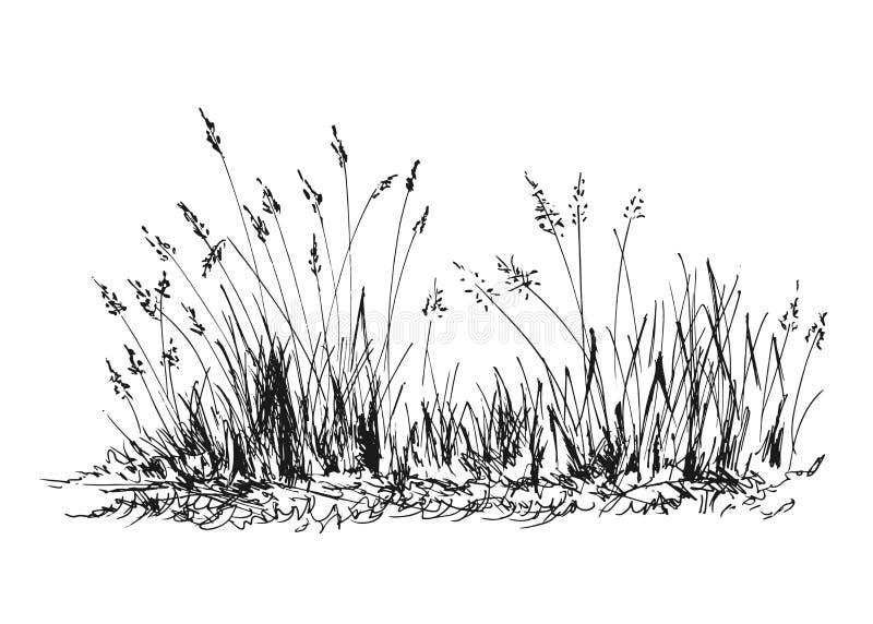 Handen skissar gräs vektor illustrationer