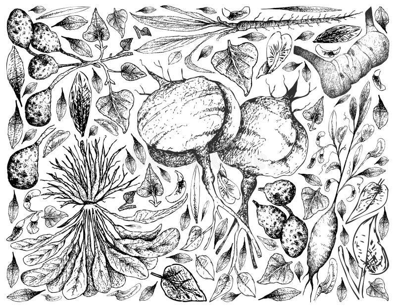 Handen som dras av, rotar och Tuberous grönsakbakgrund royaltyfri illustrationer