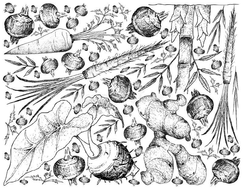 Handen som dras av, rotar och Tuberous grönsakbakgrund vektor illustrationer