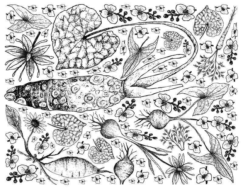 Handen som dras av, rotar och Tuberous grönsakbakgrund stock illustrationer