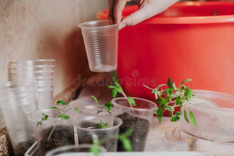 Handen tar den plast- plantabehållaren royaltyfri foto