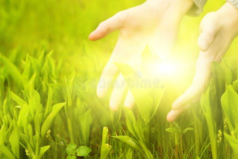 Handen wat betreft groen gras stock foto