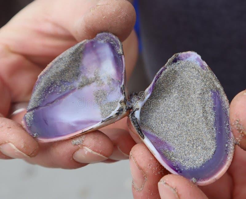 Handenholding Shell op Strand stock foto