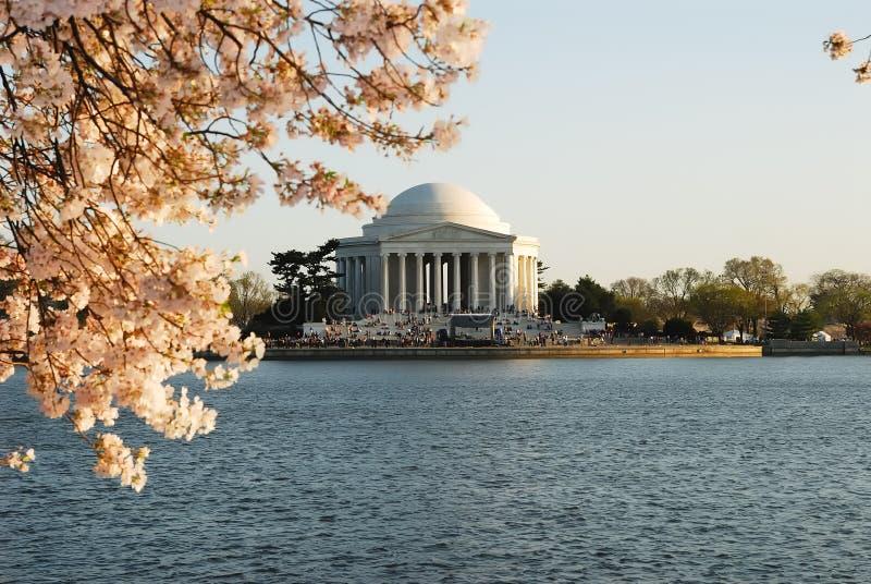 handfatet blomstrar det tidvattens- Cherryet fotografering för bildbyråer