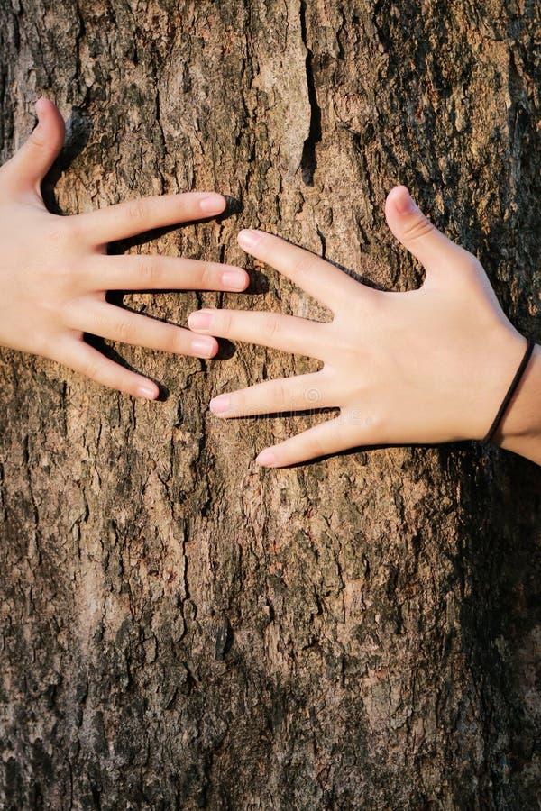 Handfrauenumarmungsbaumliebeswälder und -bäume lizenzfreie stockbilder