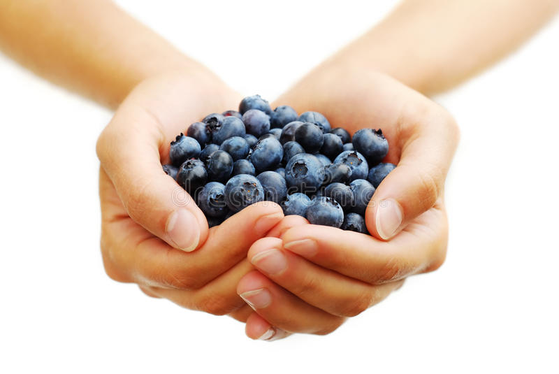 Download Handful of Blueberries stock photo. Image of sweet, healthy - 10519688