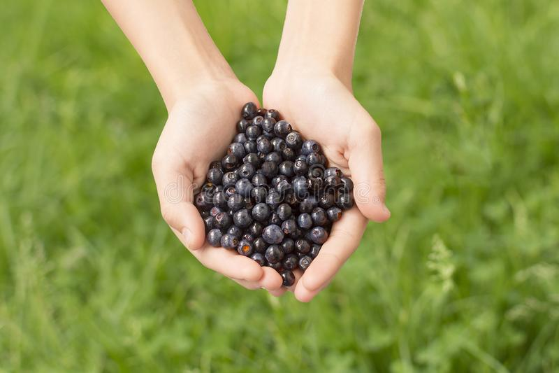 Handful of blueberries on a green background royalty free stock images