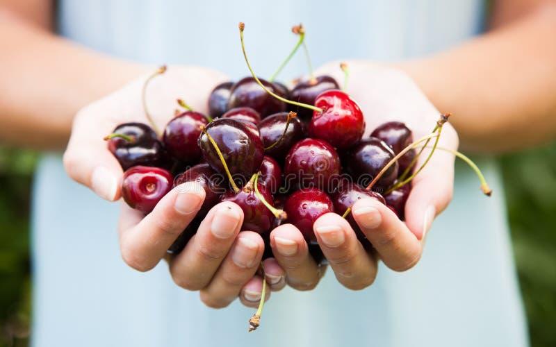 Download Handful of cherries stock photo. Image of fresh, lifestyle - 25518592