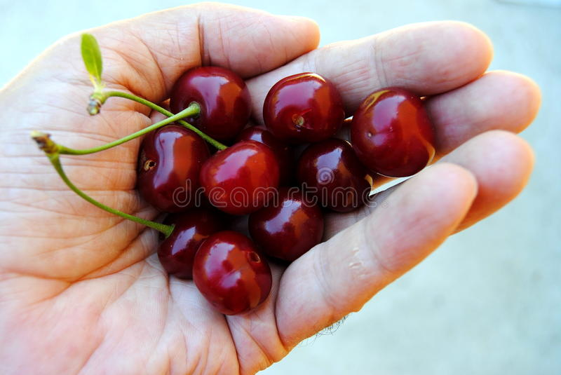 Download Handful of cherry stock image. Image of beautiful, green - 26341421