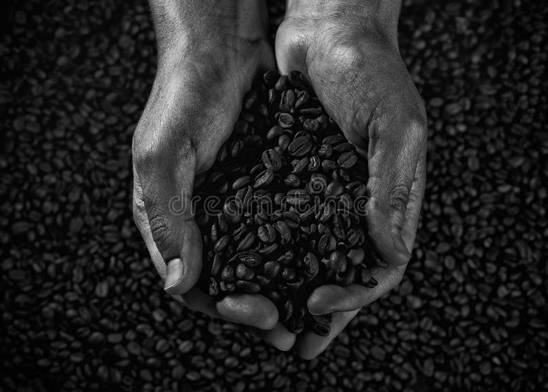 Handful of coffee beans black and white stock image