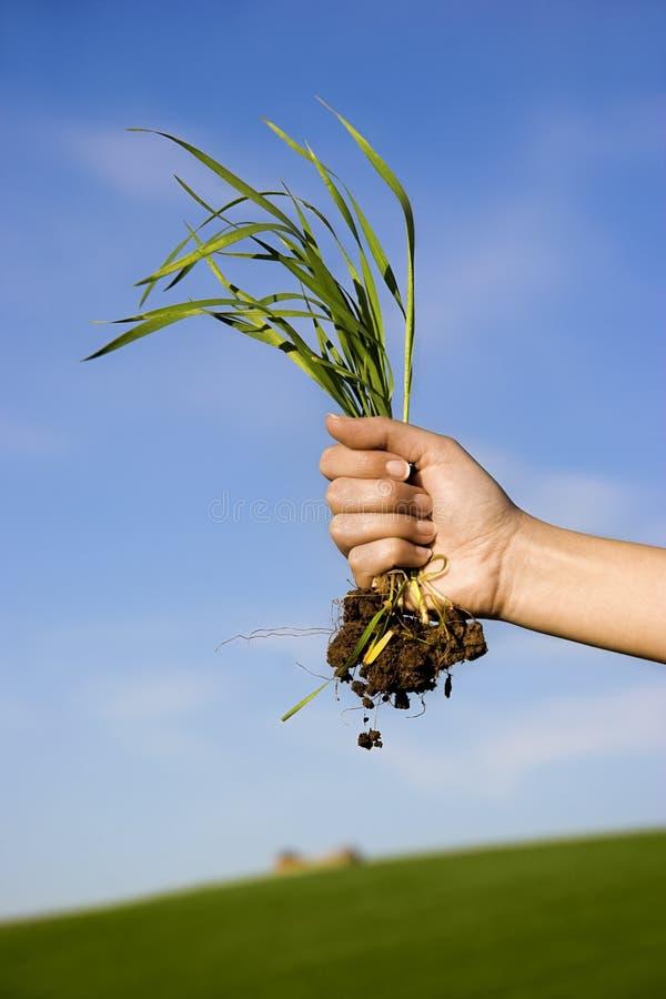 Handful of grass
