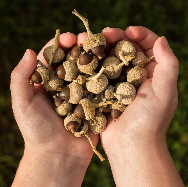 Handful Nut Seeds Stock Photo