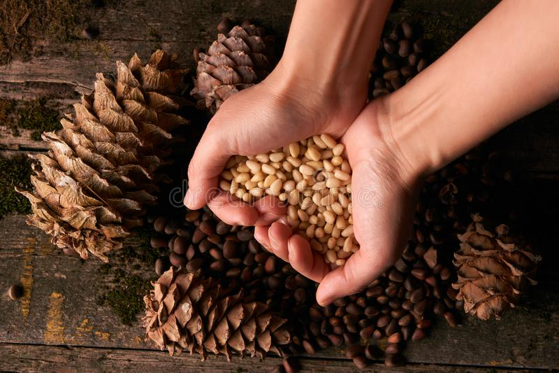 Handful of pine nuts kernels and cedar pine cones. On old wood moss background, close-up stock photos