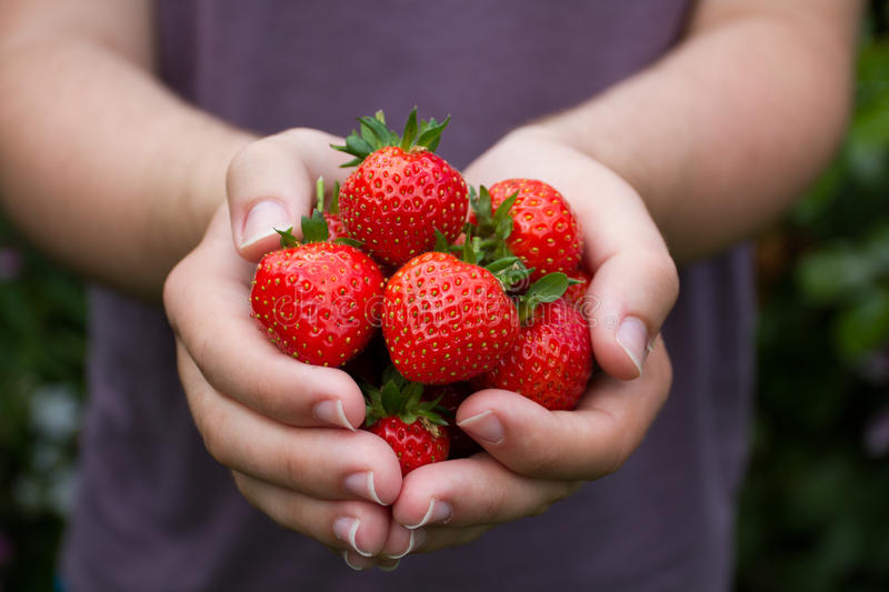 Handful Of Ripe Summer Strawberries royalty free stock photos