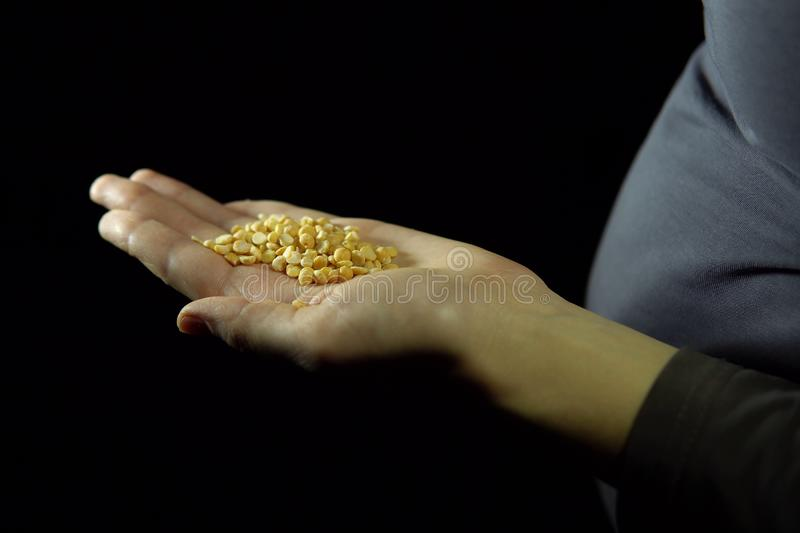 Handful of yellow split peas in hand against a black background stock photo