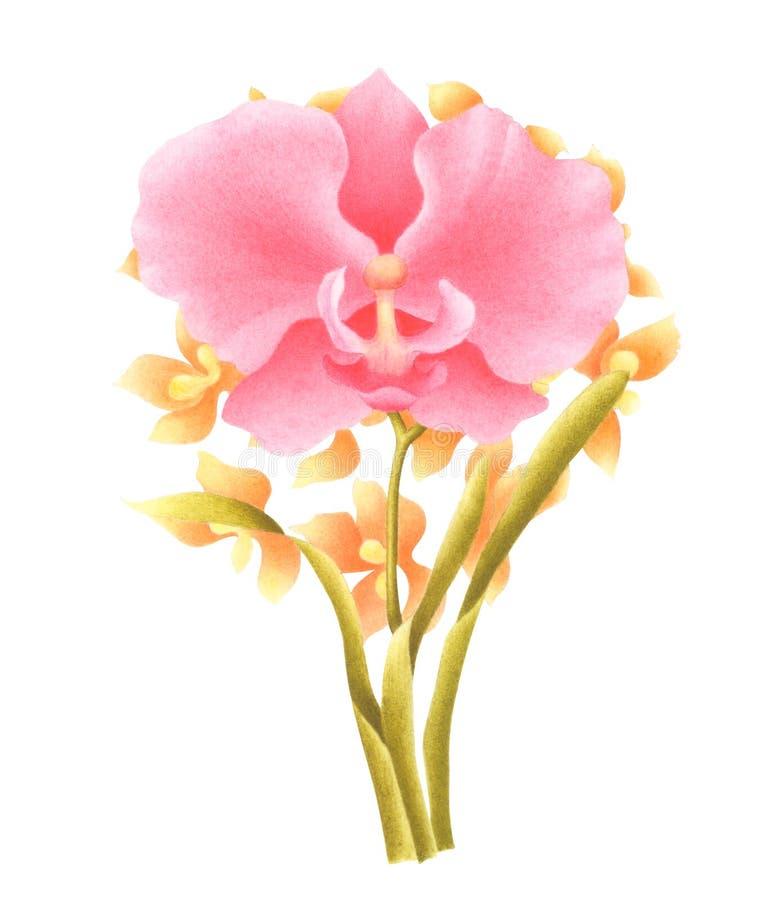 Handgemalte Aquarell-Blume Aquarellorchideenblumenstrauß lokalisiert auf weißem Hintergrund Wenn der Beschneidungspfad eingeschlo lizenzfreie stockfotografie