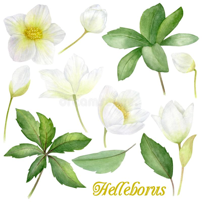 Handgemalte Aquarellblumen eingestellt in Weinleseart Es ` s perfekt für Grußkarten, Hochzeitseinladung, Geburtstag und stock abbildung