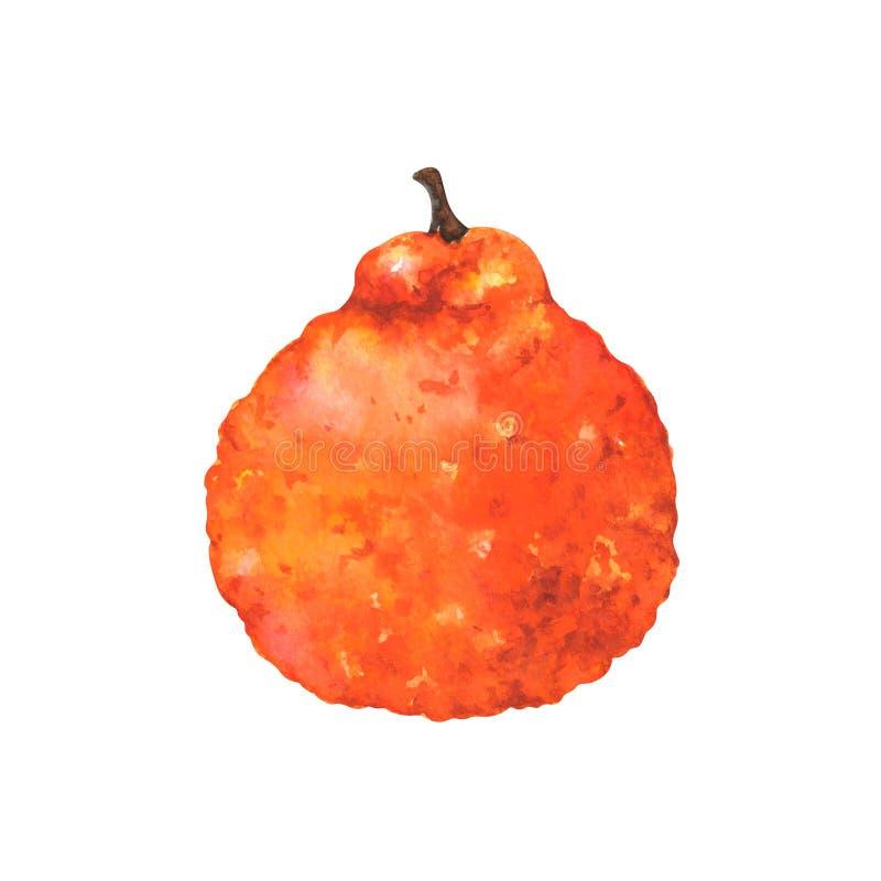Handgemalte Aquarellillustration der hässlichen Frucht stock abbildung