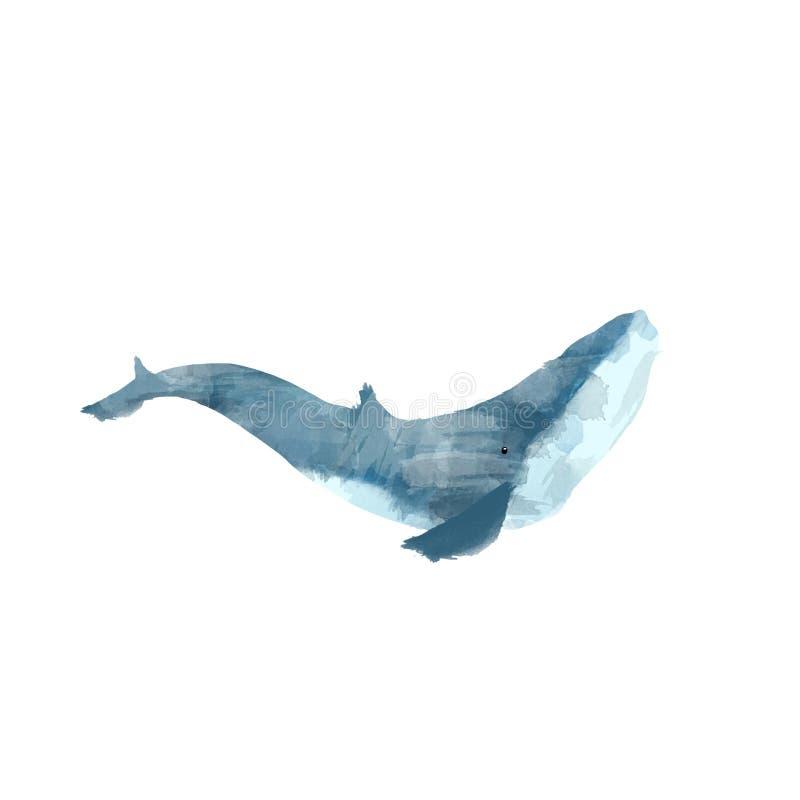 Handgemalte Illustration des Aquarellwals lokalisiert auf weißem Hintergrund Realistische Unterwassertierkunst Modernes künstleri stock abbildung