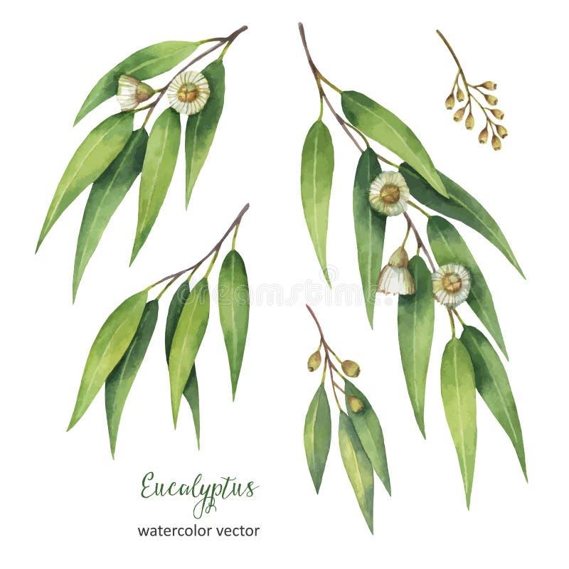 Handgemalter Vektorsatz des Aquarells mit Eukalyptusblättern und -niederlassungen stock abbildung