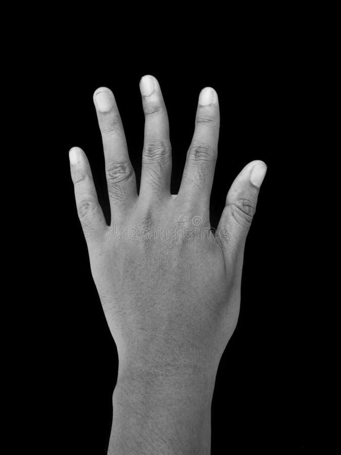 Handgest för nummer fem den svarta flickan döljer white för skjorta för manfotografi s arkivbild