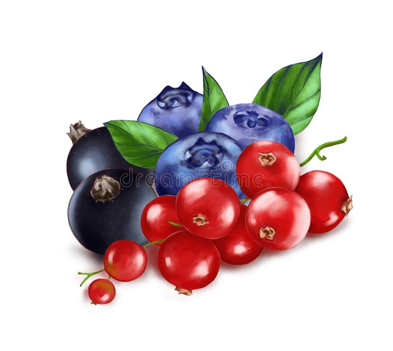Handgezogene Aquarellillustration der Nahrung: reife geschmackvolle rote, Schwarze Johannisbeere und Blaubeere lizenzfreies stockbild