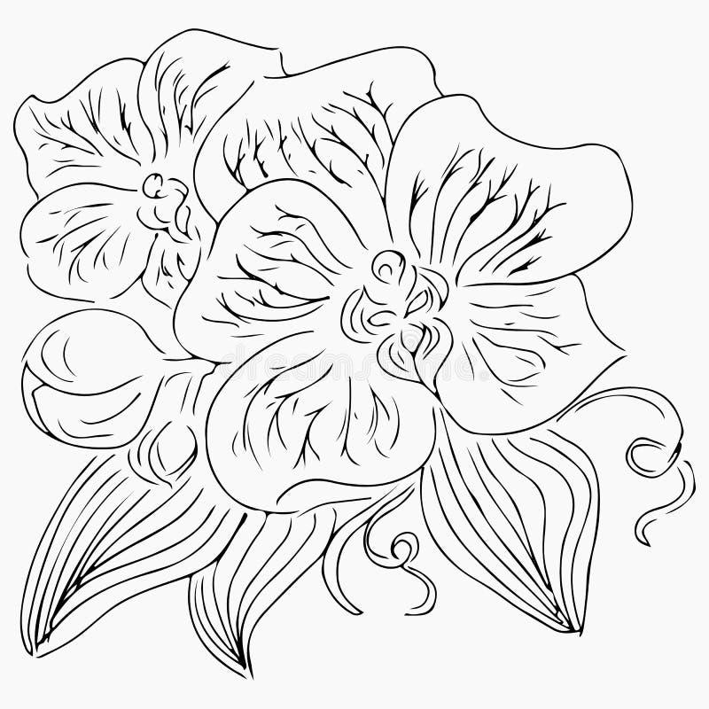 Handgezogene Illustration der Orchideenblume lokalisiert auf wei?em Hintergrund Hand gezeichnete Abbildung Linie Kunst umrei? stock abbildung