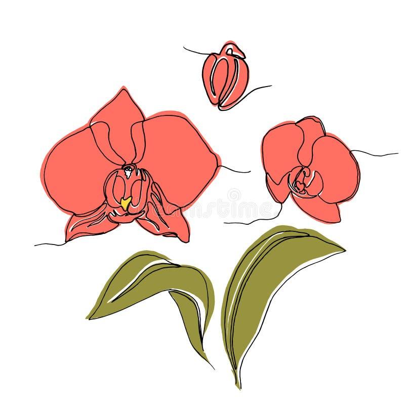 Handgezogene Orchideenblume, eine Federzeichnung der einzelnen Zeile stock abbildung