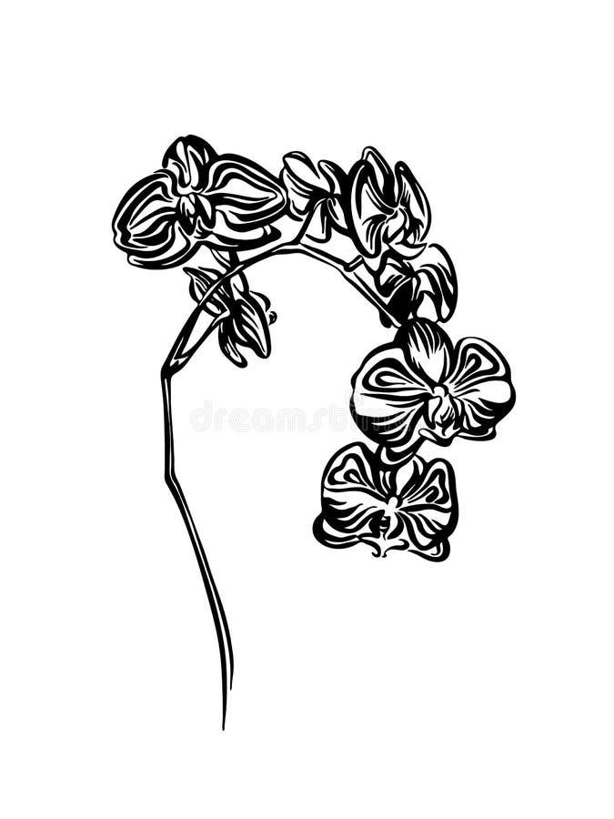Handgezogene Orchideenblumen-Entwurfsskizze Vektorschwarz-Tintenzeichnung lokalisiert auf weißem Hintergrund Grafische Illustrati lizenzfreie abbildung