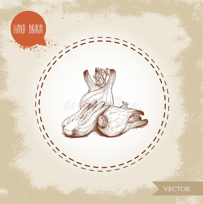 Handgezogene Skizzenfenchel-Birnenzusammensetzung Würzige Wurzelanlage mit Blättern Kraut-, Gewürz- und Würzvektorillustration lizenzfreie abbildung