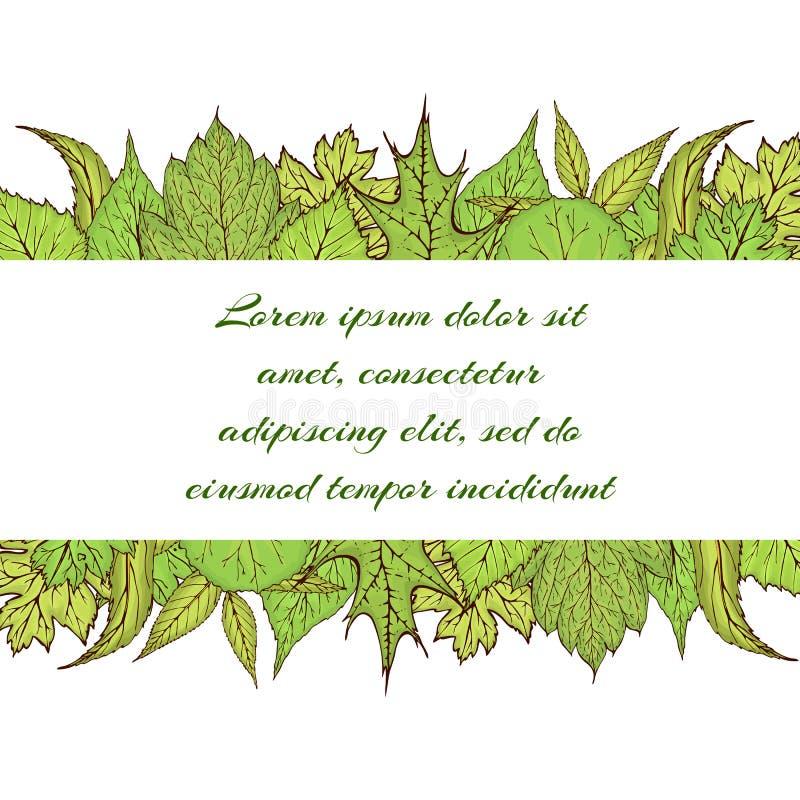 Handgezogene Vektorfahne mit grünen Waldblättern und -niederlassungen Fr?hlings- oder Sommerbl?tter f?r Einladung, Hochzeit oder vektor abbildung