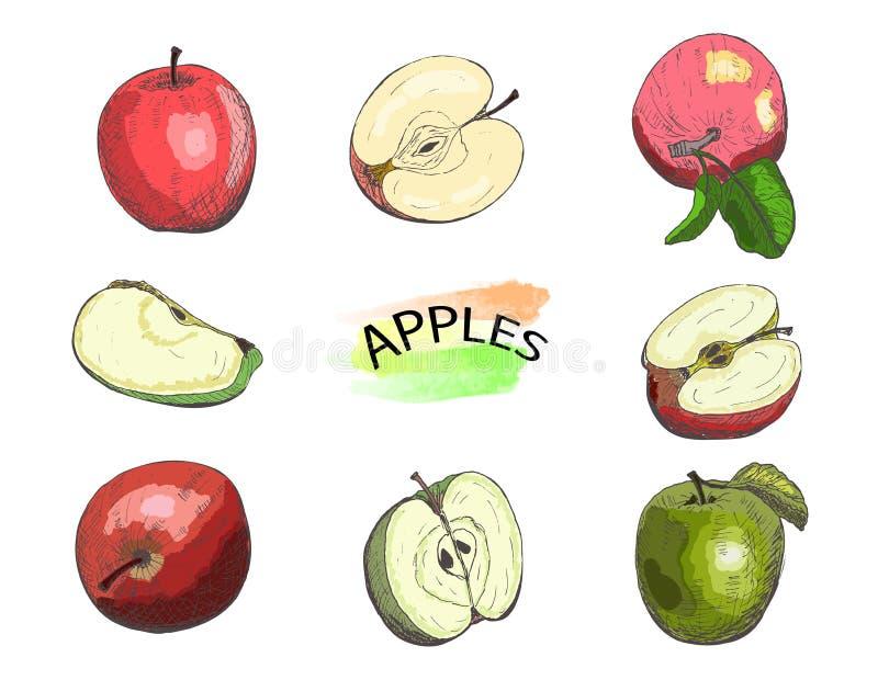 Handgezogener farbiger Apfelsatz lokalisiert auf weißem Hintergrund vektor abbildung