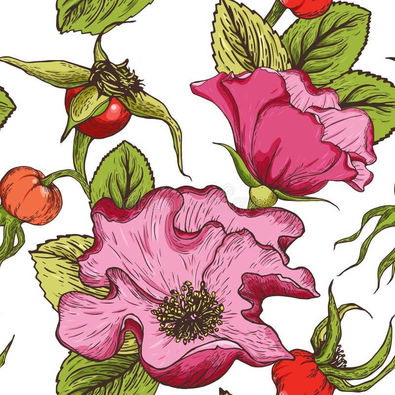 Handgezogenes nahtloses Muster des Farbhundes stieg die Blumen, Beeren und Laub, die auf einem weißen Hintergrund lokalisiert wur lizenzfreie abbildung