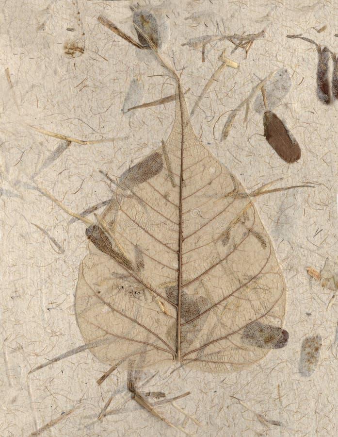 handgjort leafskelett arkivfoto