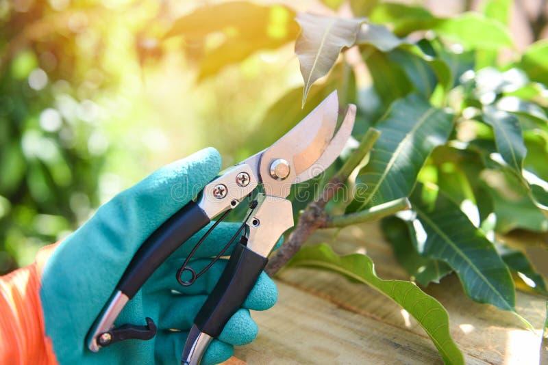 Handholding het snoeien scharen in de tuinlandbouw - het Tuinieren hulpmiddel en de werkenconcept stock foto
