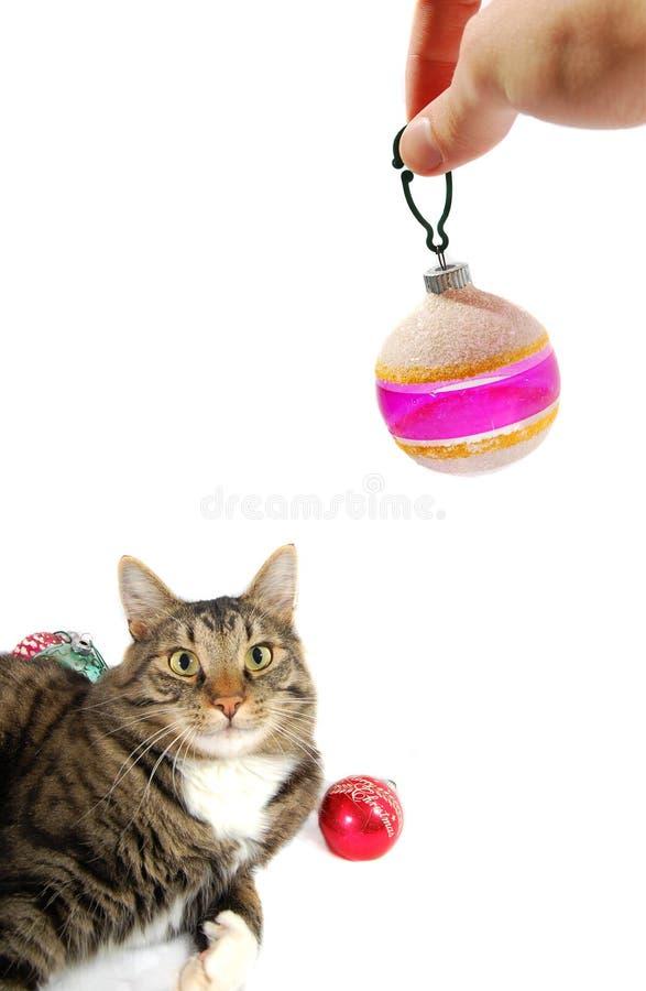 Handholding Weihnachtsverzierung nahe bei Katze stockfotografie