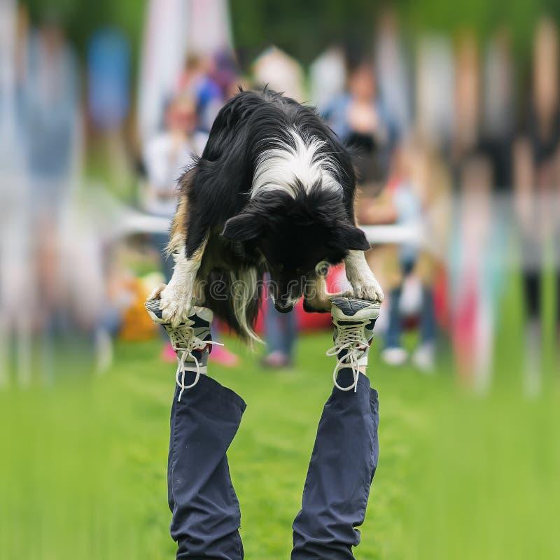 Handige prestaties van geschikt hond met eigenaar Circus bijna acrobatische stunt Concept vriendschap tussen de mens en royalty-vrije stock foto's