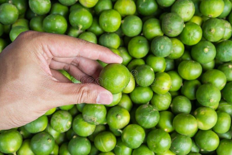 Handinnehavlimefrukt på marknaden royaltyfria foton