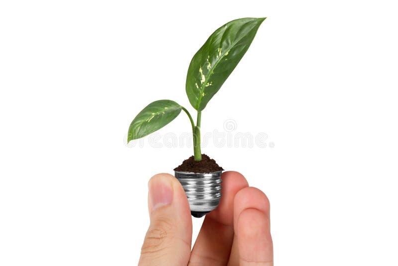 Handinnehavväxt som växer i ljus kula arkivfoton